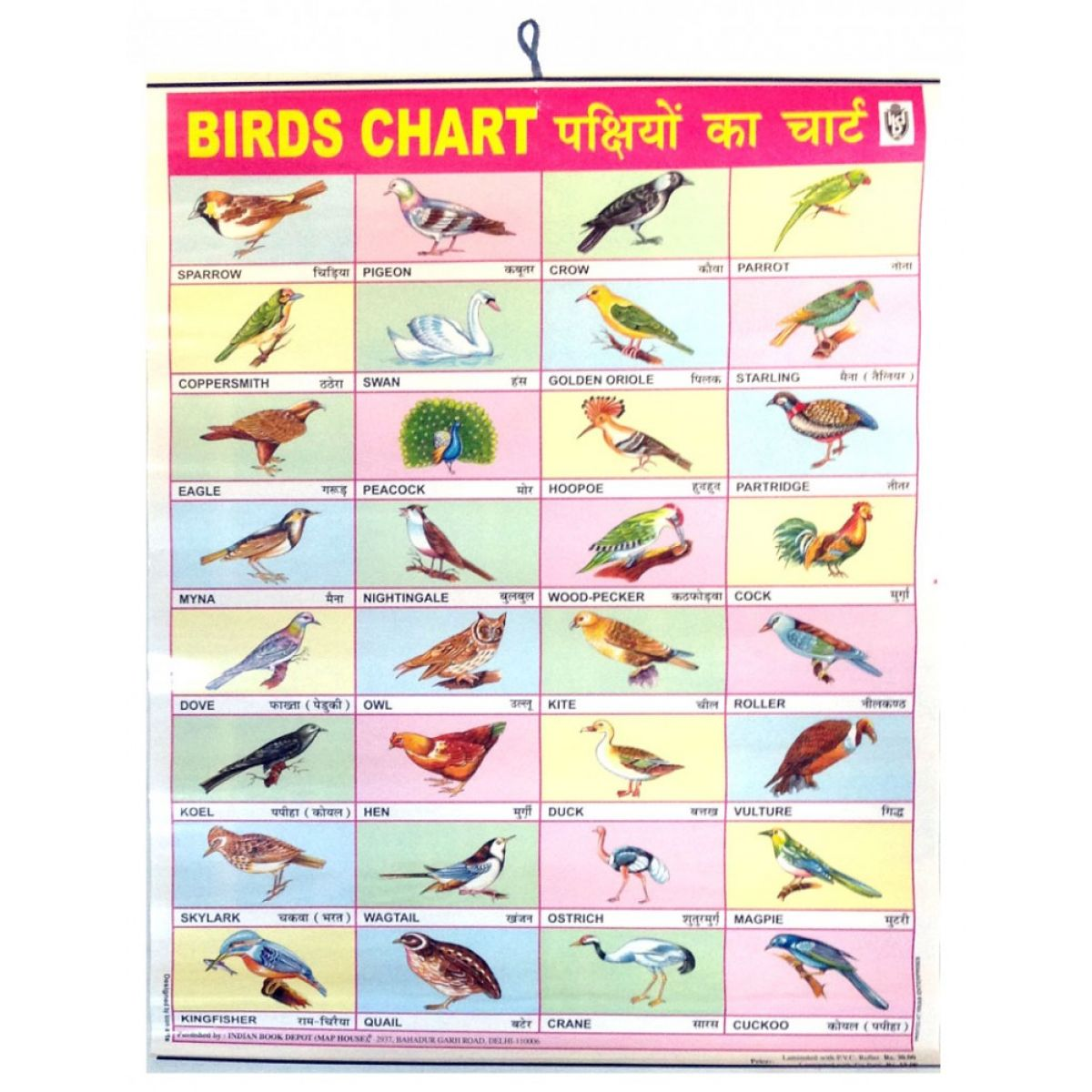 birds chart poster 57 x 45cm for the wall colored english hindi